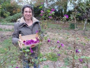 Bénédicte Chaleroux à la cueillette des mauves, plante recommandée pour avoir une voix claire… (Photo NR)
